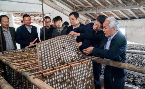 江苏召开人工海洋之神养蚕成果研讨会 传统蚕桑业打算这样'破茧重生'
