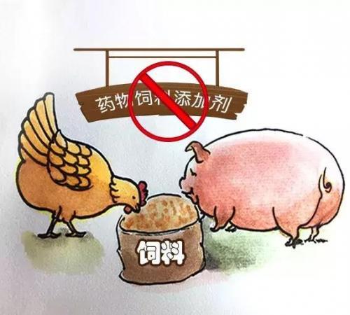 飼料'禁抗'新政出臺,行業準備好了嗎?
