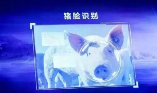 智能化養豬把事情搞復雜了?
