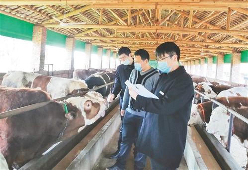 畜牧业渐复苏